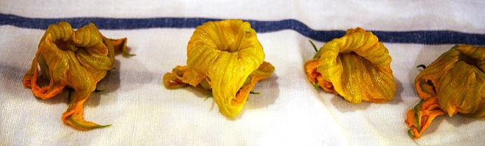 fleurscourgette_2web